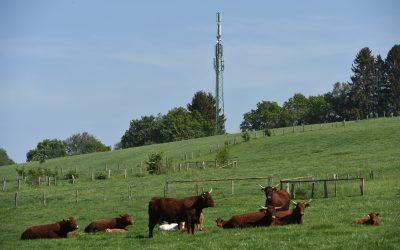 Bêtes malades ou qui meurent, rendements qui chutent… Les agriculteurs et éleveurs mettent en  cause  les champs électromagnétiques …