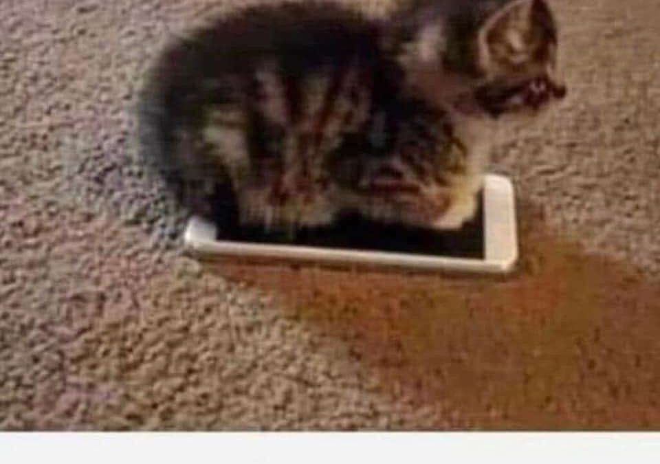 🐱Après la Cat G vient la CAT+1 G (5G)😅😅😅…Focus sur nos animaux domestiques🐶 il est si mignon non?
